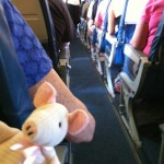 Piggie ready to fly to Paris